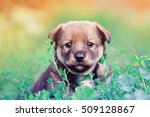 Stock photo cute funny little puppy peeking out of the grass 509128867