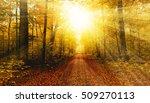 Bright Sun In Autumn Forest
