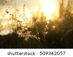 close up dried flowers on a... | Shutterstock . vector #509362057
