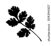 coriander silhouette | Shutterstock .eps vector #509394307