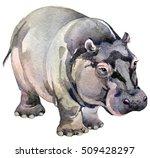 hippo. african animals.... | Shutterstock . vector #509428297