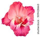 Single Velvet Flower Bud Of...