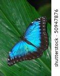 butterfly | Shutterstock . vector #50947876