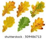 Set Of Autumn Leaves Of Oak...
