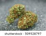 marijuana   cannabis buds. weed ... | Shutterstock . vector #509528797