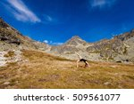 yoga exercising in slovakian... | Shutterstock . vector #509561077