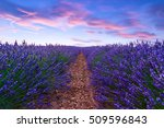 lavender field summer sunset... | Shutterstock . vector #509596843