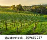 Small photo of Beautiful vineyard sunset in South Australia