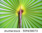 palm leaf background close up... | Shutterstock . vector #509658073