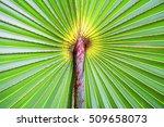 palm leaf background close up... | Shutterstock . vector #509658073