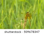 dragonfly outdoor on wet morning | Shutterstock . vector #509678347