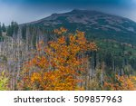 Small photo of Forest in high mountain at autumn after ruination storm
