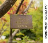 Small photo of Acer palmatum coreanum Sign Hanging on one of its Branches in a Woodland Setting at Knightshayes in Rural Devon, England, UK