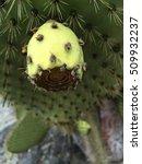 Galapagos Cactus Close Up