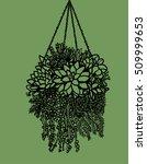 succulent plants   Shutterstock .eps vector #509999653