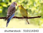 Two Multi Colored Budgie Are O...