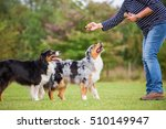 woman trains with two... | Shutterstock . vector #510149947