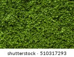Wall Of Green Trees.