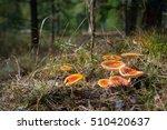 Small photo of Group of amanita mushrooms