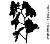 orchid silhouette  illustration ... | Shutterstock .eps vector #510679363