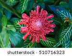 Top View Torch Ginger  Red...
