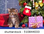 cute fluffy kitten near... | Shutterstock . vector #510844033