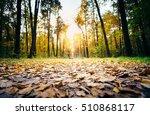 Selective Focus On Autumn...