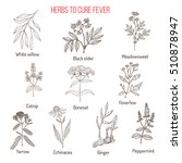 herbs for fever cure  hand... | Shutterstock .eps vector #510878947