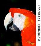 scarlet macaw closeup   Shutterstock . vector #511107277