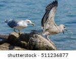 Outside Photo Of Seagull Bird...