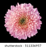 pink red  purple flower... | Shutterstock . vector #511336957