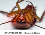 macro of cockroach insects of... | Shutterstock . vector #511365637