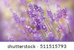 Soft Focus On Lavender Flower ...