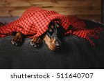 Beautiful Doberman Dog Lying O...