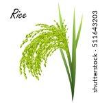 rice  oryza sativa  asian rice .... | Shutterstock .eps vector #511643203