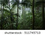 Tropical Rainforest Landscape...