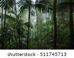 Tropical Rainforest Landscape...