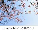 White Cherry Blossom Flower ...