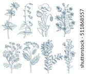 herbs wild flowers botanical... | Shutterstock . vector #511868557