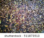 Leaves Fallen On Wet Ground.