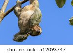 three toed sloth hanging from a ... | Shutterstock . vector #512098747