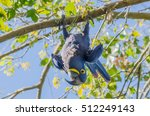 hyacinth macaw   Shutterstock . vector #512249143