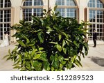 green tree and groom with a... | Shutterstock . vector #512289523