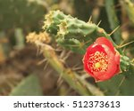 Small photo of �¡actus blossoms
