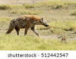 Hyena In National Park Of Keny...