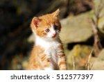 Stock photo yellow and white farm kitten 512577397
