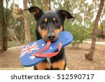 Cute Black And Tan Kelpie ...