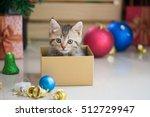 Cute Tabby Kitten Playing In A...