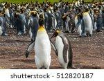 Two King Penguins  Aptenodytes...