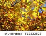 autumn in a forest | Shutterstock . vector #512823823